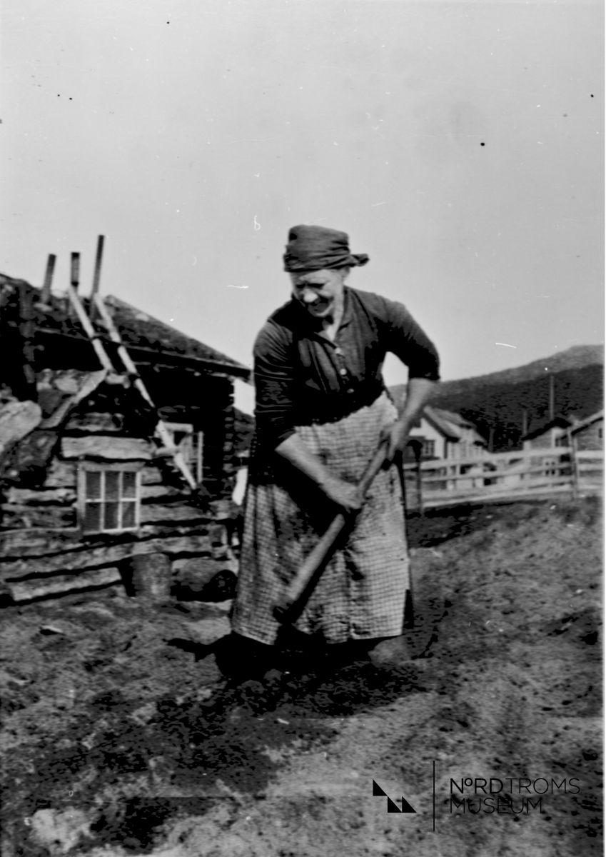 Ida Johnsen setter poteter, Skibotn.
