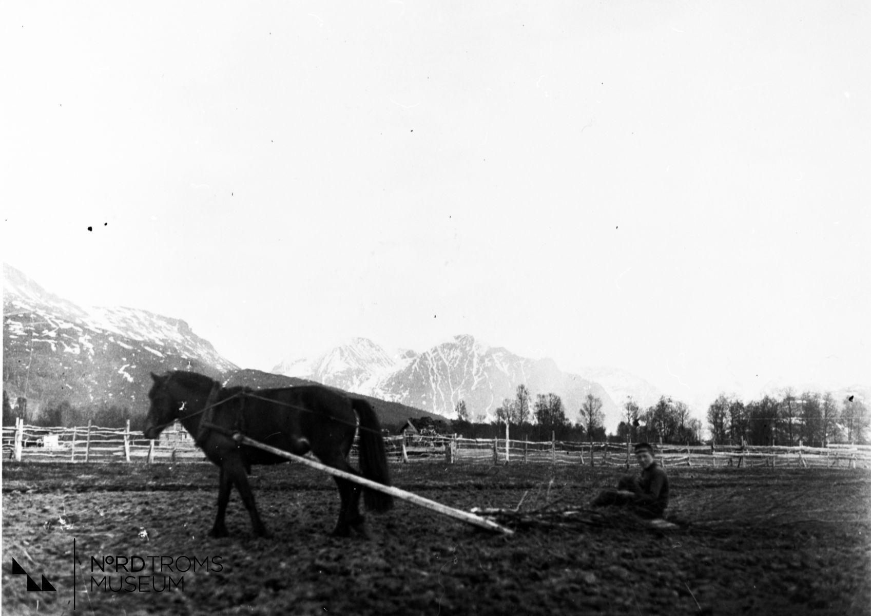 Hest og risharv