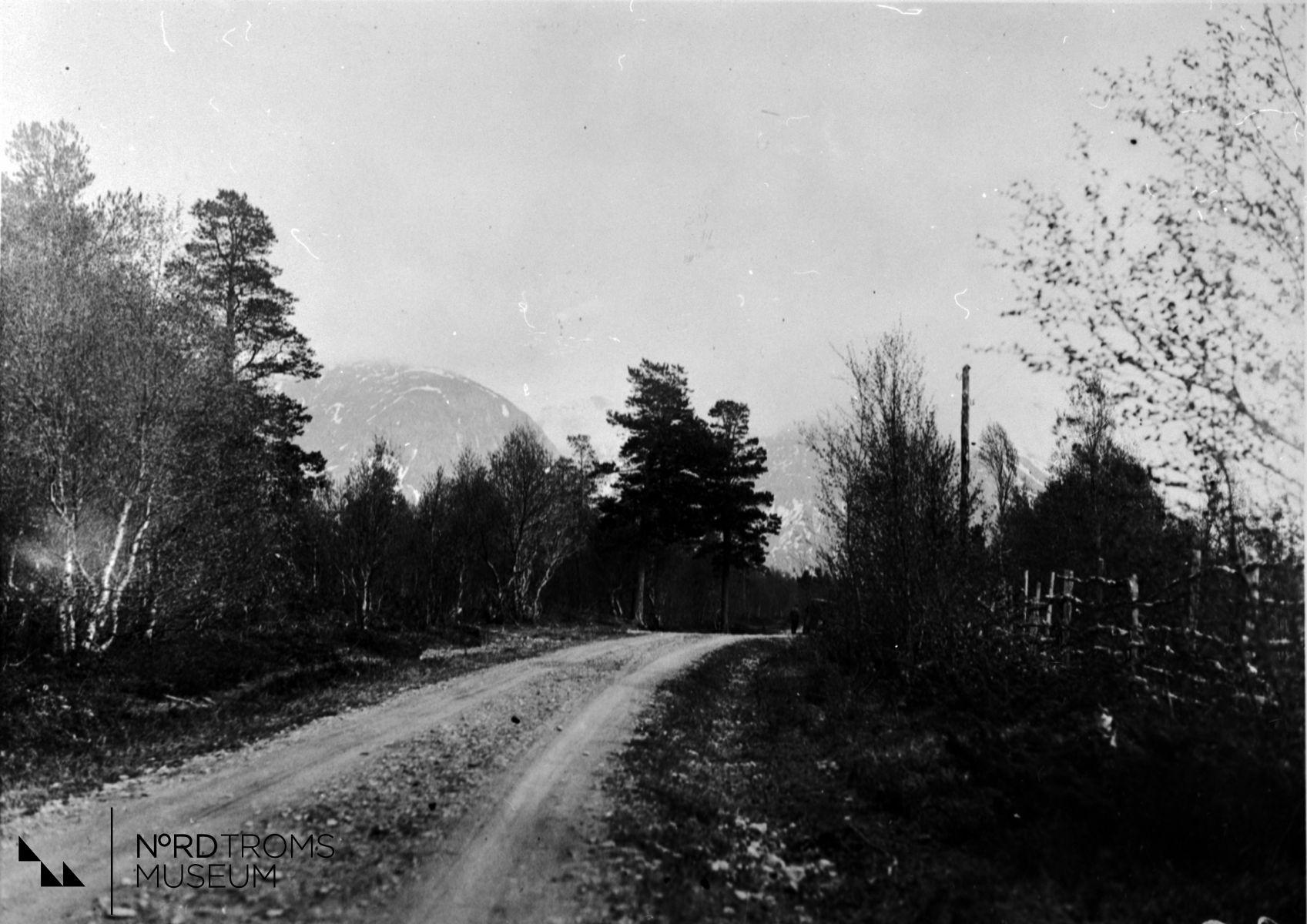 Roijalogaissa, Moskuvankka, Roijalon ensimmæisiæ pitæjiæ. (Røyelfjellet, Moskodalen, Røyelen`s første bebyggelse.)